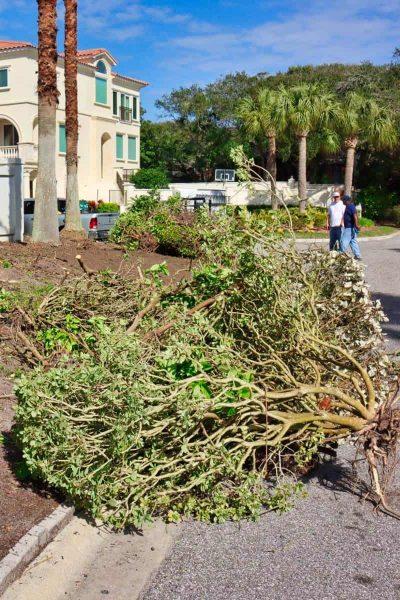 McDaniels-Landscaping-Company-Jacksonville-FL (11)