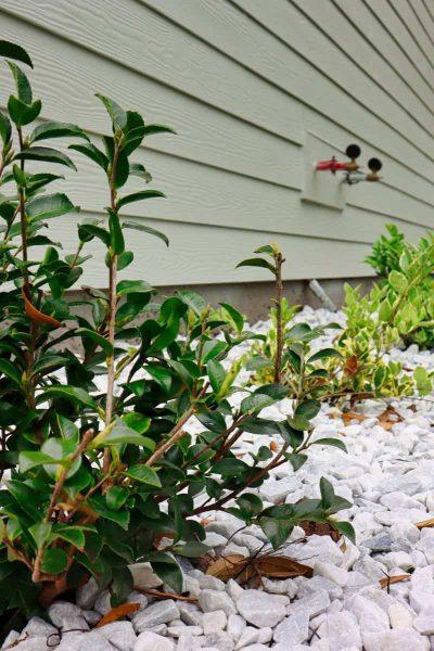 McDaniels-Lawn-Care-Landscaping-Jacksonville-FL-1.jpg (12)
