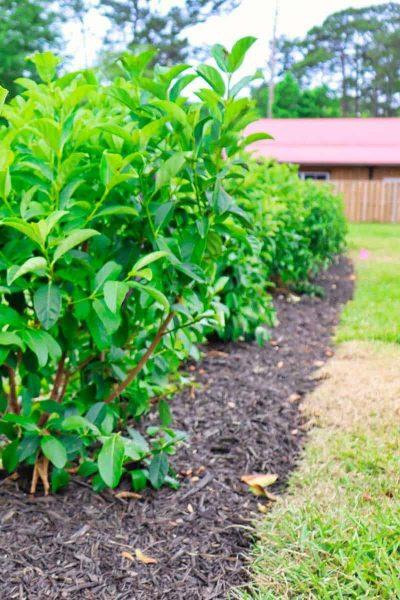 McDaniels-Lawn-Care-Landscaping-Jacksonville-FL-1.jpg (19)_1